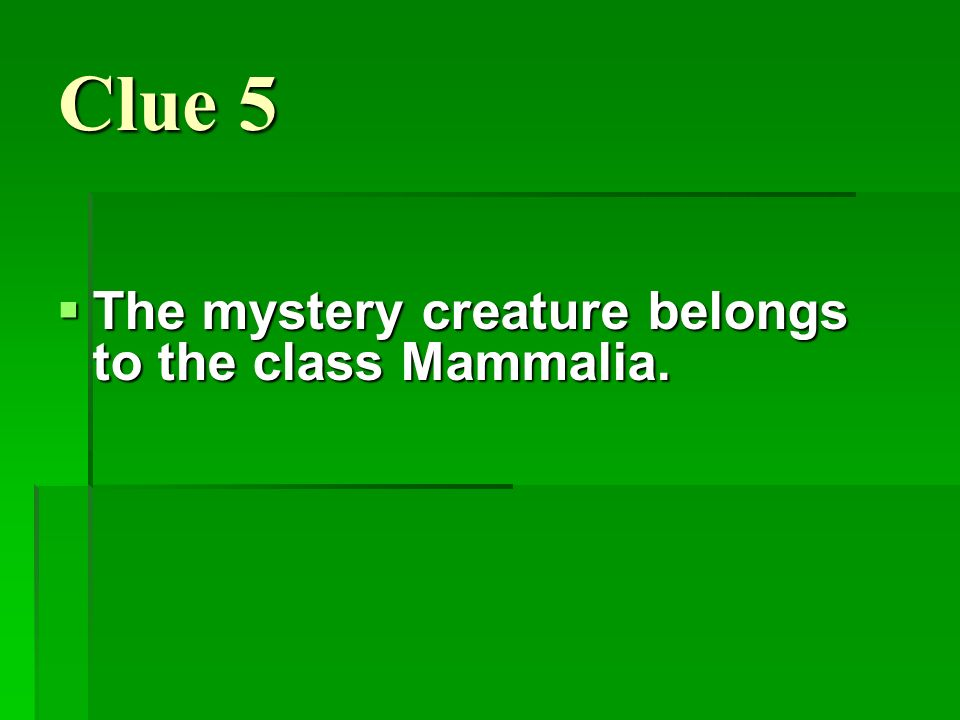 Clue 5 The mystery creature belongs to the class Mammalia.