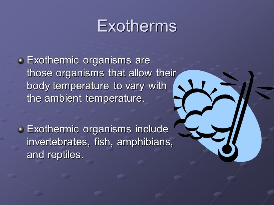 Exotherms Exothermic organisms are those organisms that allow their body temperature to vary with the ambient temperature.