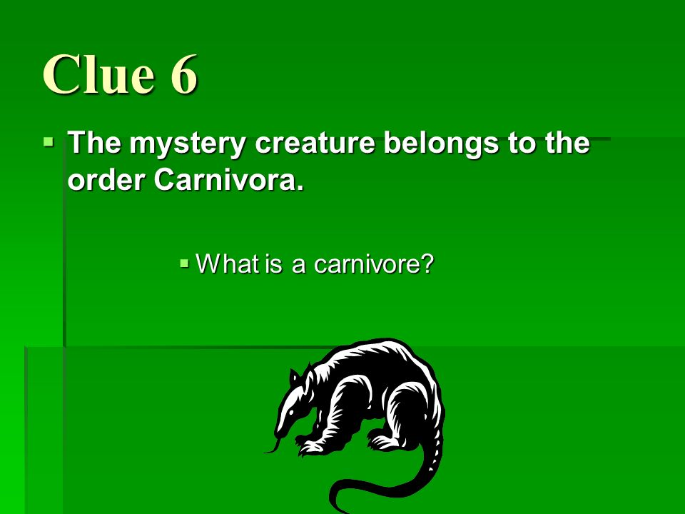 Clue 6 The mystery creature belongs to the order Carnivora.