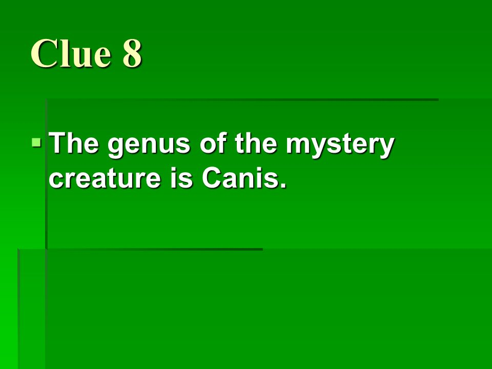 Clue 8 The genus of the mystery creature is Canis.
