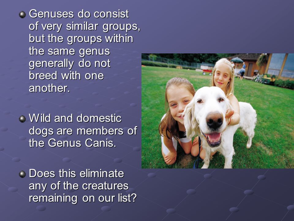 Genuses do consist of very similar groups, but the groups within the same genus generally do not breed with one another.