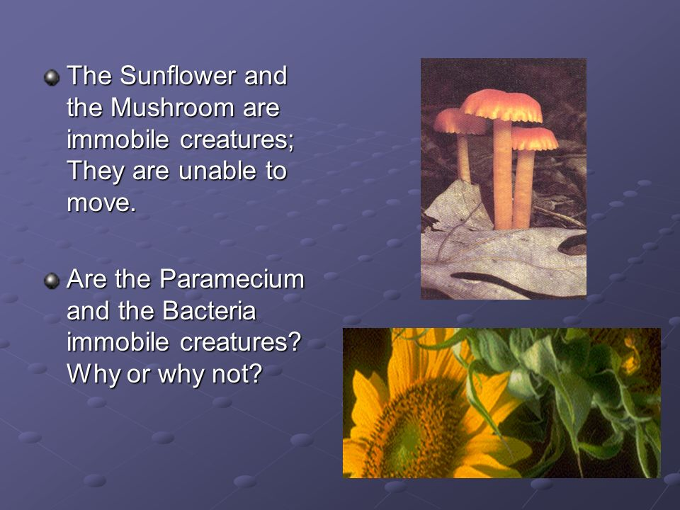 The Sunflower and the Mushroom are immobile creatures; They are unable to move.