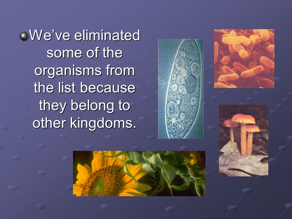 We've eliminated some of the organisms from the list because they belong to other kingdoms.