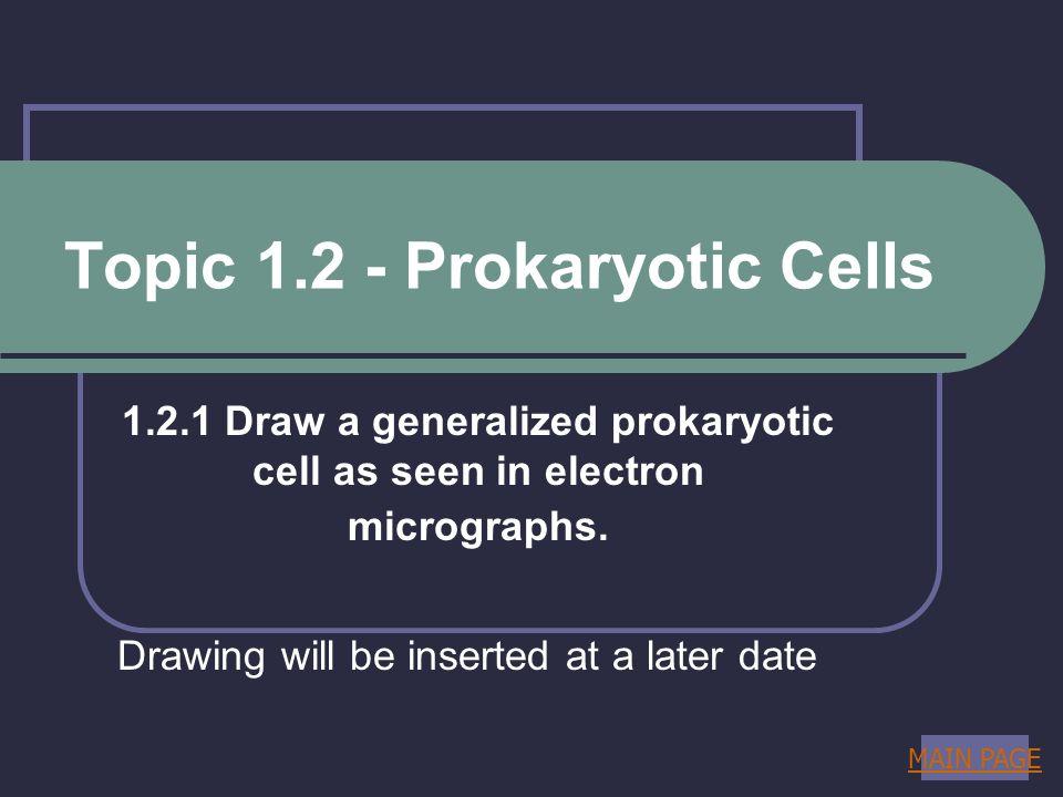Topic 1.2 - Prokaryotic Cells