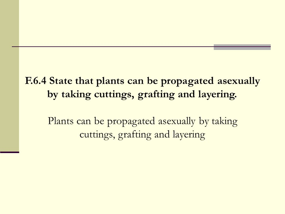 F.6.4 State that plants can be propagated asexually