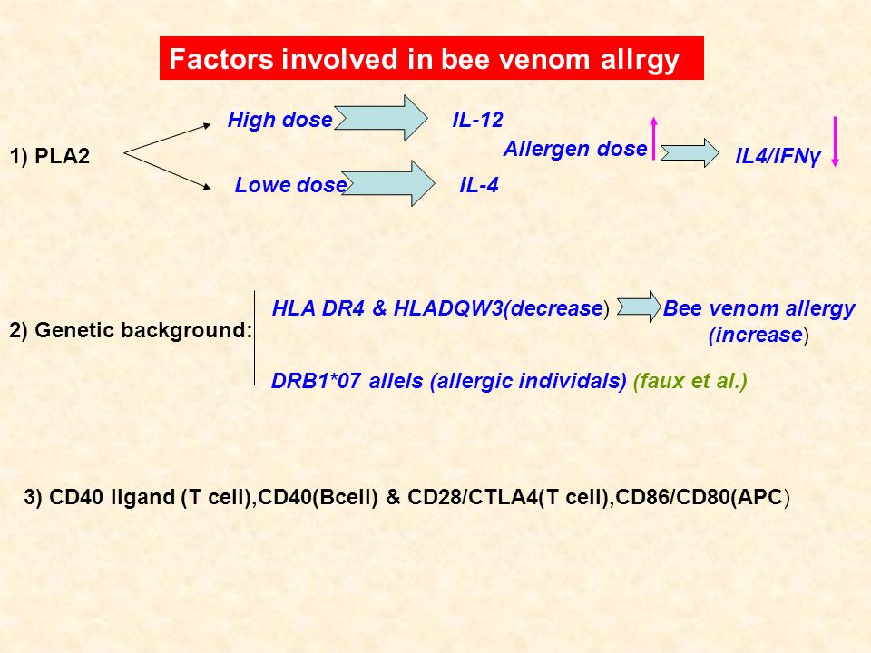 Bee venom allergy (increase)