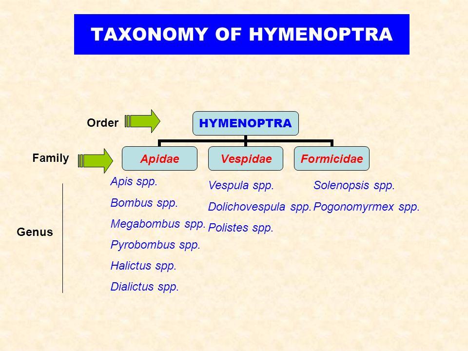 TAXONOMY OF HYMENOPTRA