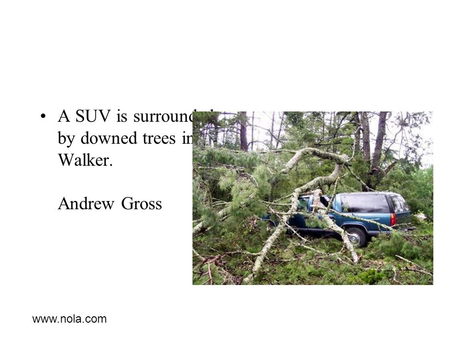A SUV is surrounded by downed trees in Walker. Andrew Gross
