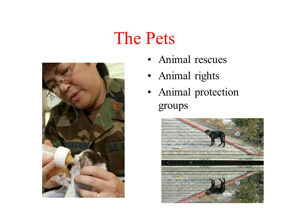 The Pets Animal rescues Animal rights Animal protection groups
