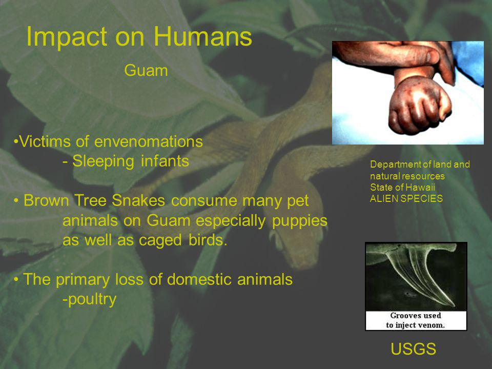 Impact on Humans Guam Victims of envenomations - Sleeping infants