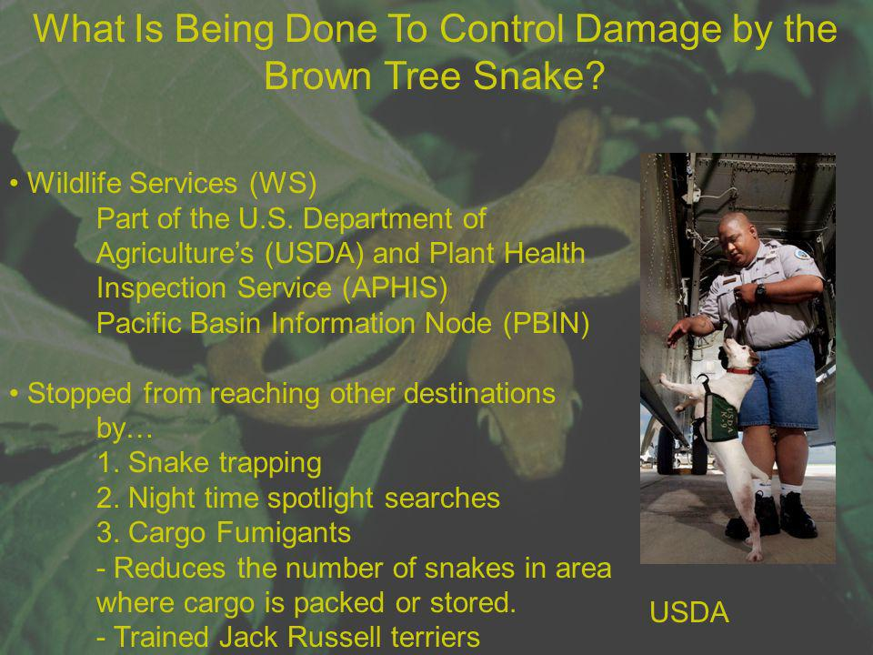 What Is Being Done To Control Damage by the Brown Tree Snake