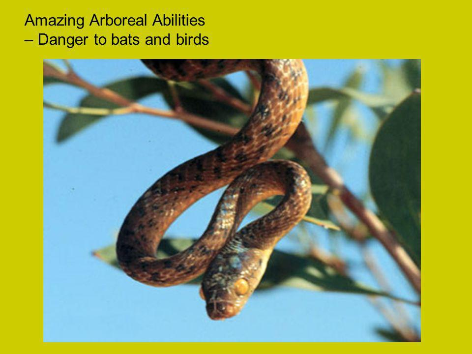 Amazing Arboreal Abilities – Danger to bats and birds