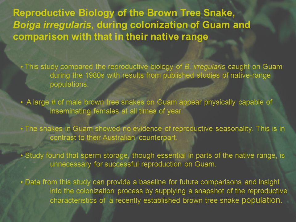 Reproductive Biology of the Brown Tree Snake, Boiga irregularis, during colonization of Guam and comparison with that in their native range