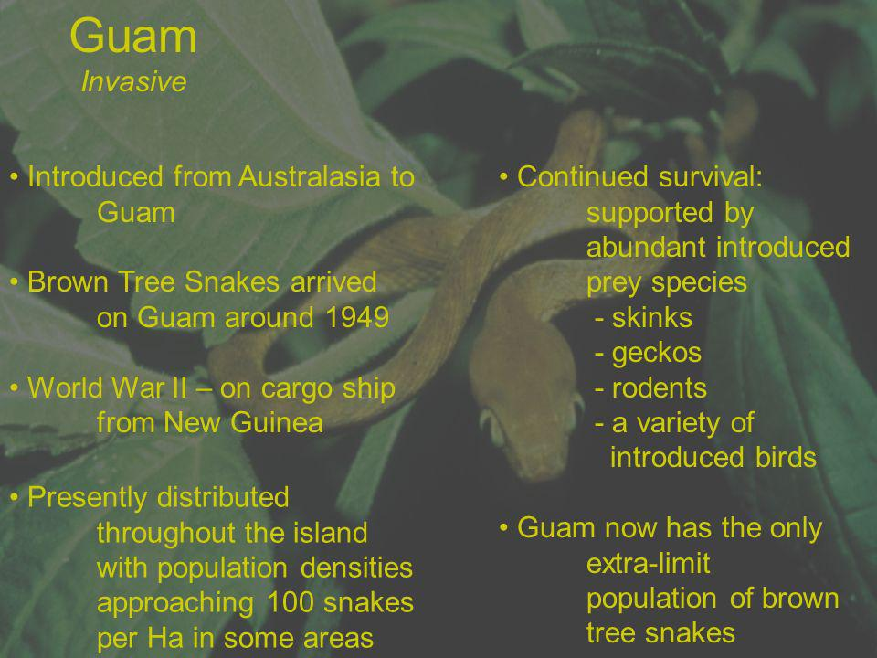 Guam Invasive Introduced from Australasia to Guam
