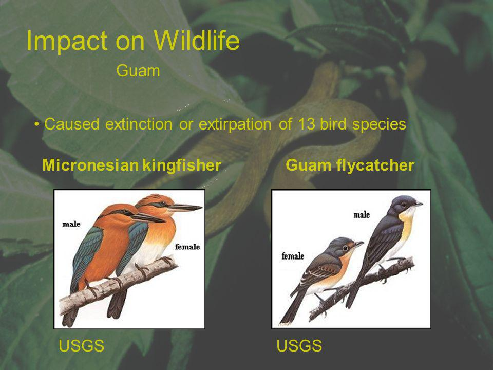 Impact on Wildlife Guam