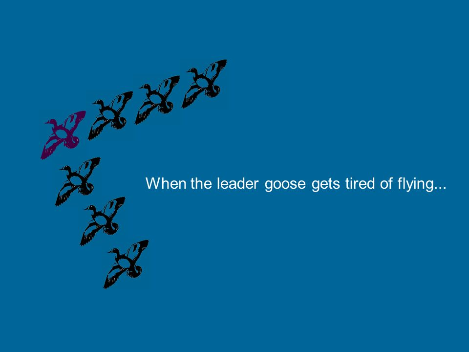 When the leader goose gets tired of flying...