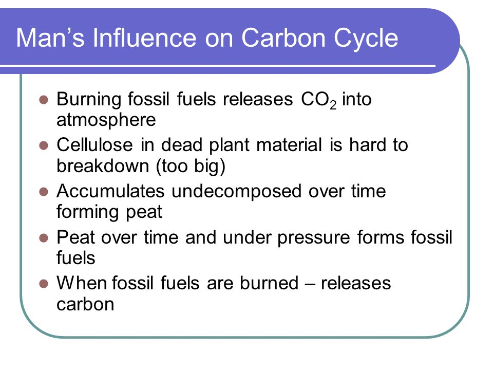 Man's Influence on Carbon Cycle