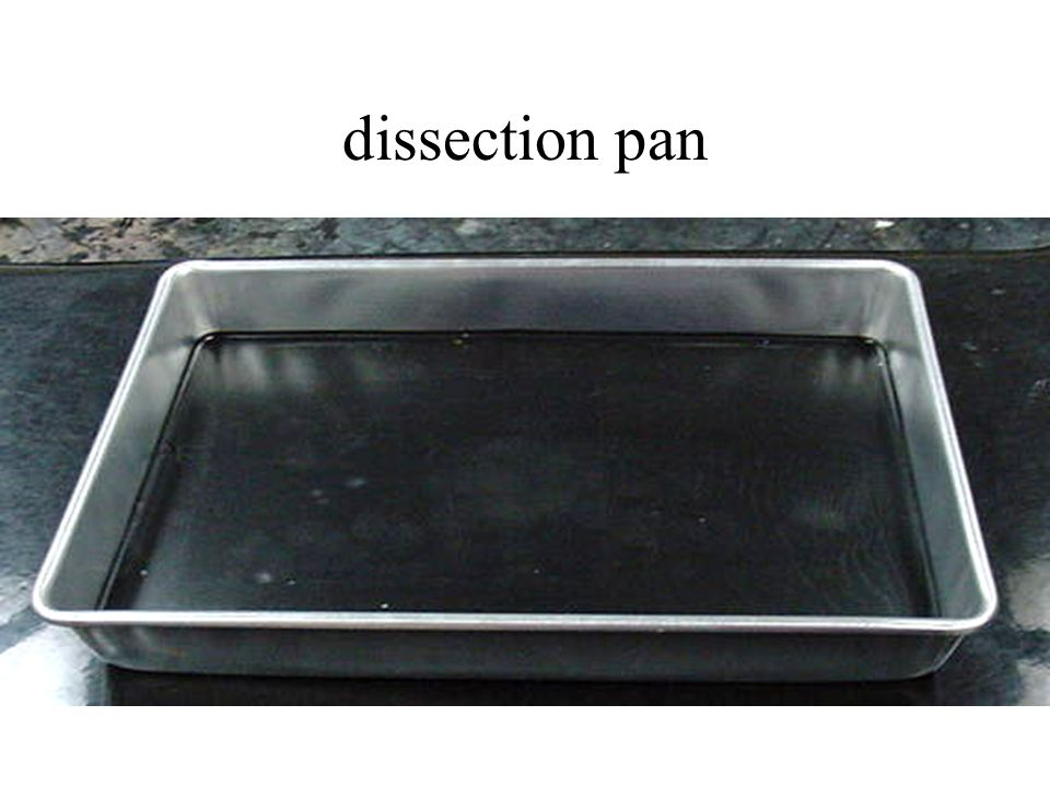 dissection pan