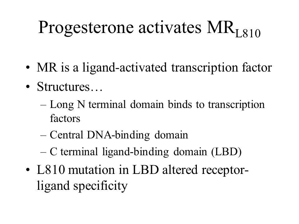 Progesterone activates MRL810