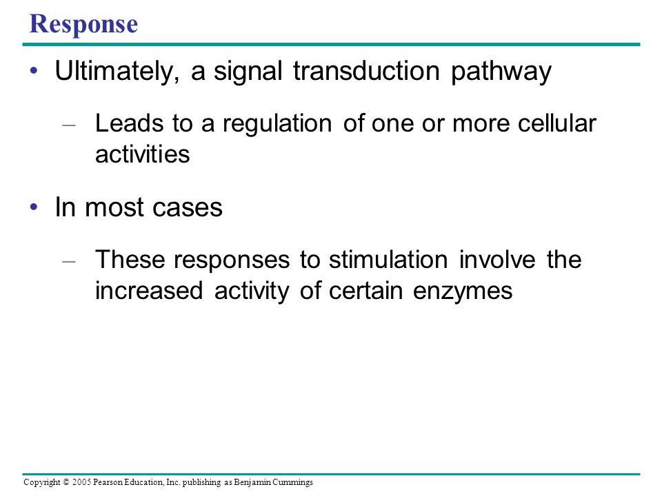 Ultimately, a signal transduction pathway