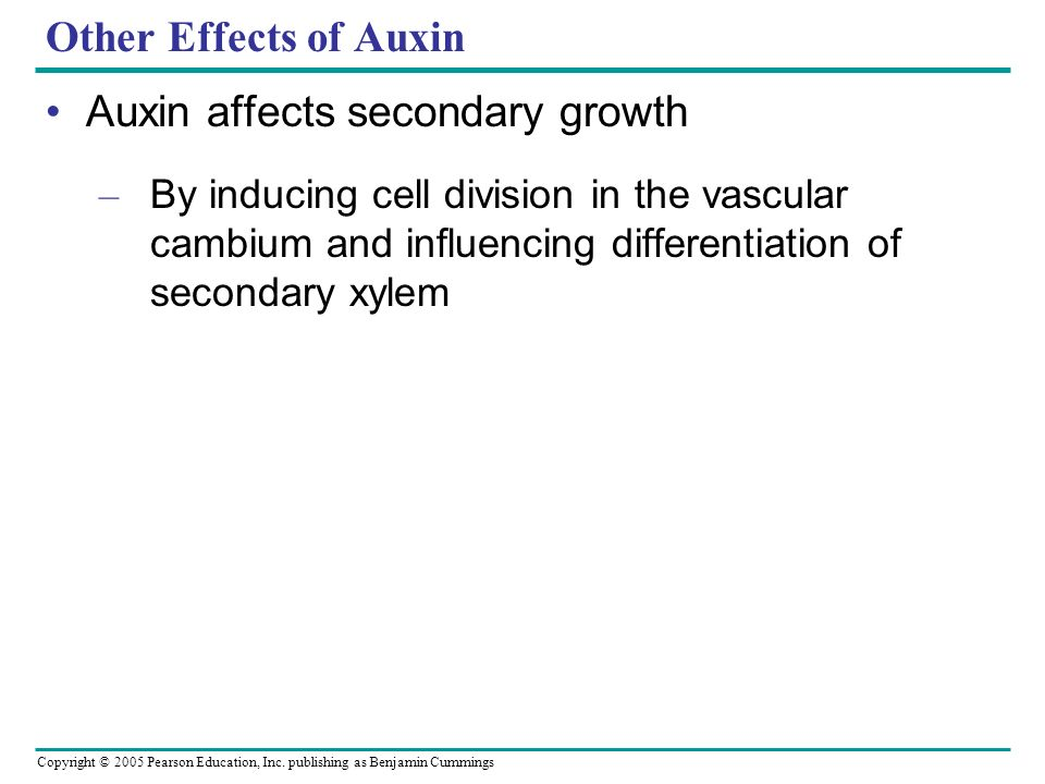 Auxin affects secondary growth