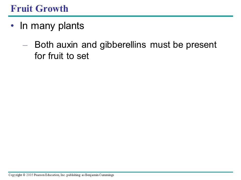 Fruit Growth In many plants