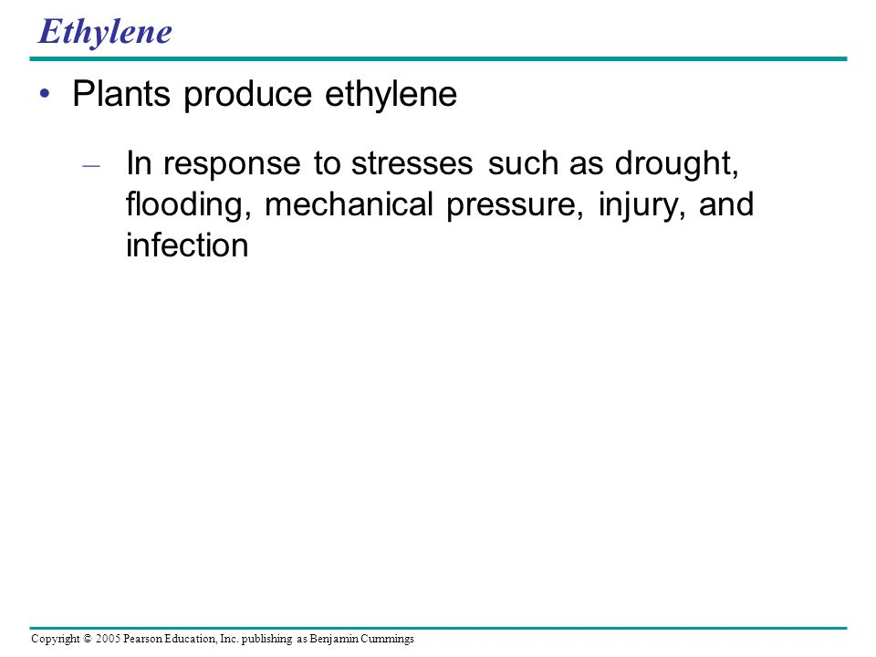 Plants produce ethylene