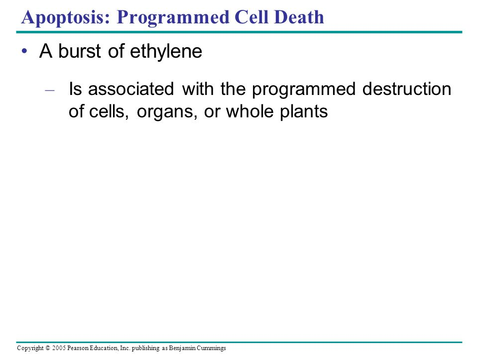 Apoptosis: Programmed Cell Death