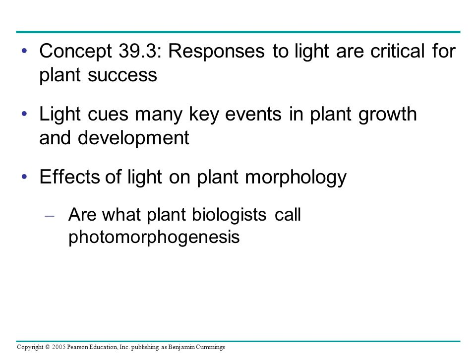 Concept 39.3: Responses to light are critical for plant success