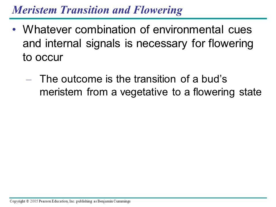 Meristem Transition and Flowering
