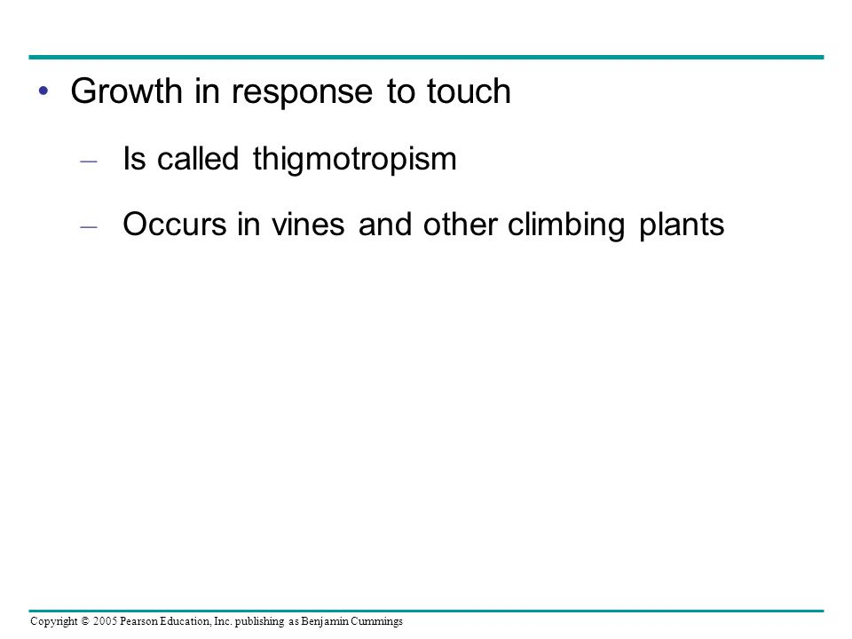 Growth in response to touch