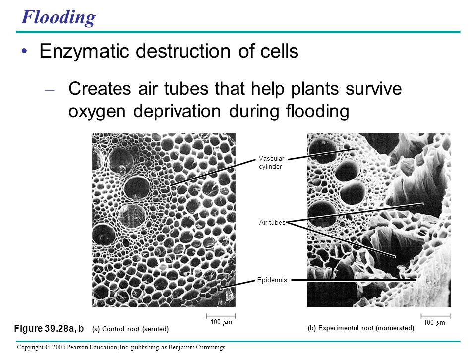 Enzymatic destruction of cells
