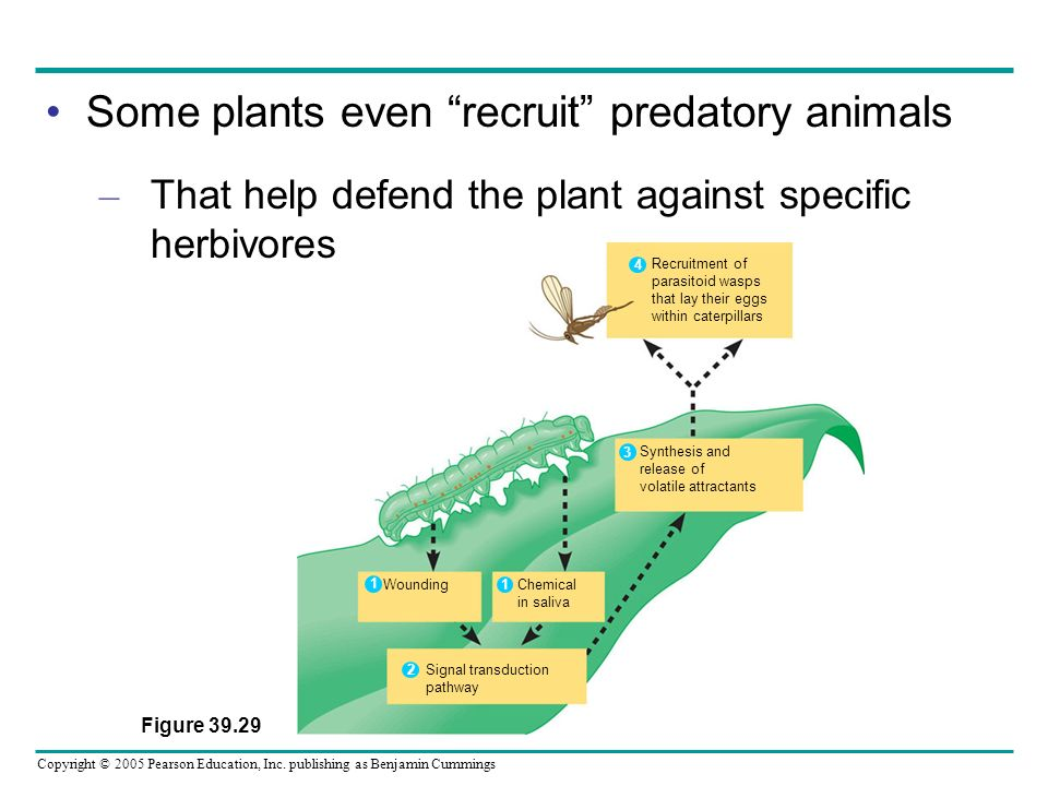 Some plants even recruit predatory animals