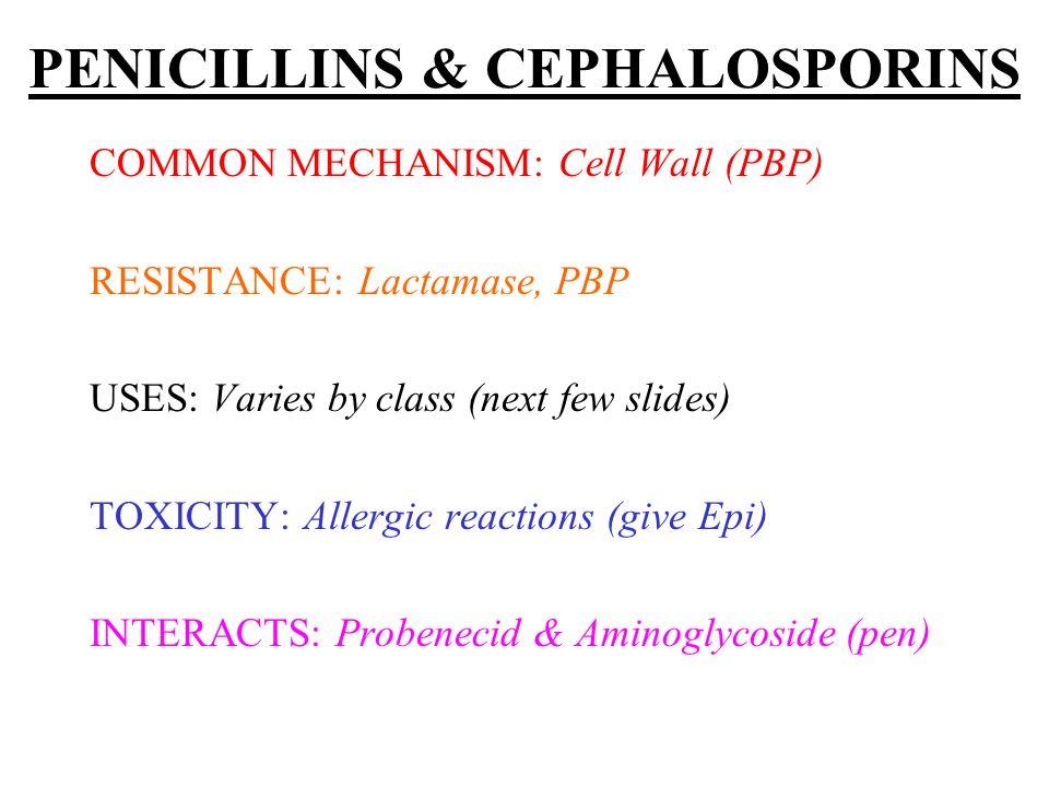 PENICILLINS & CEPHALOSPORINS