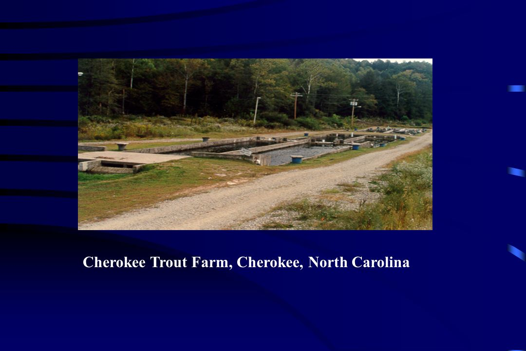 Cherokee Trout Farm, Cherokee, North Carolina
