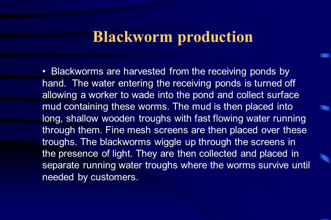 Blackworm production