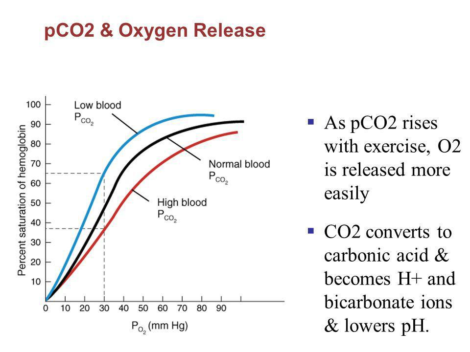 As pCO2 rises with exercise, O2 is released more easily