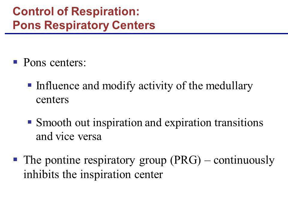 Control of Respiration: Pons Respiratory Centers