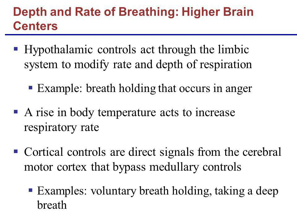 Depth and Rate of Breathing: Higher Brain Centers