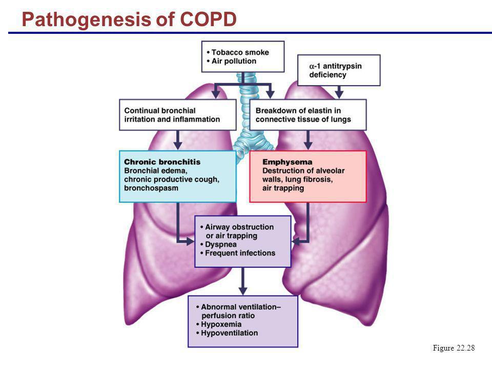 Pathogenesis of COPD Figure 22.28