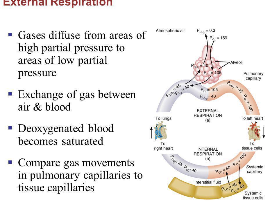 Exchange of gas between air & blood