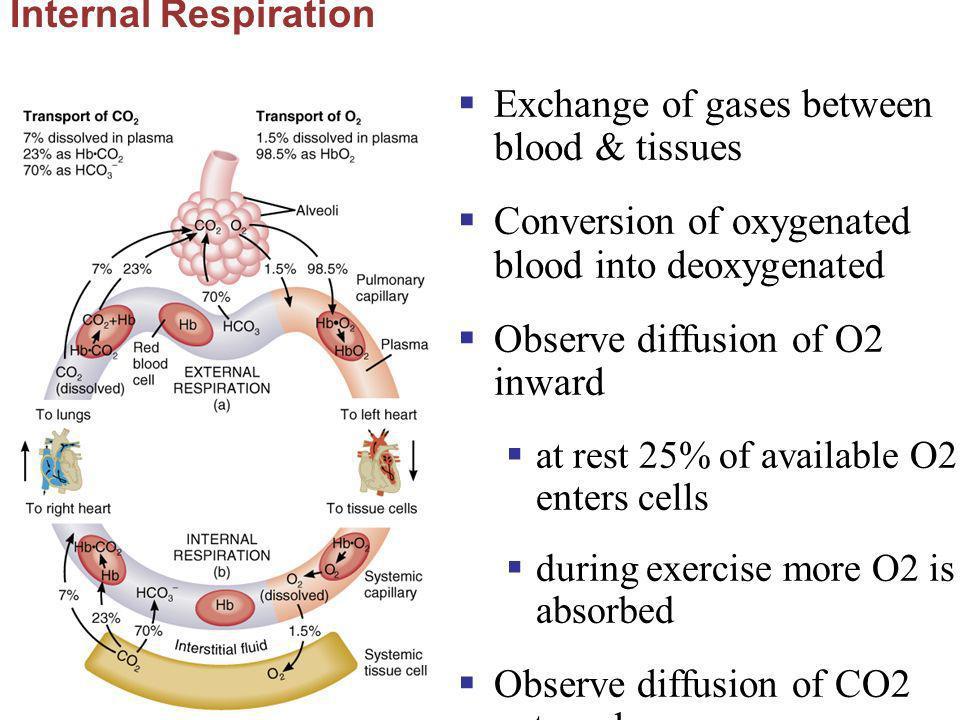 Exchange of gases between blood & tissues