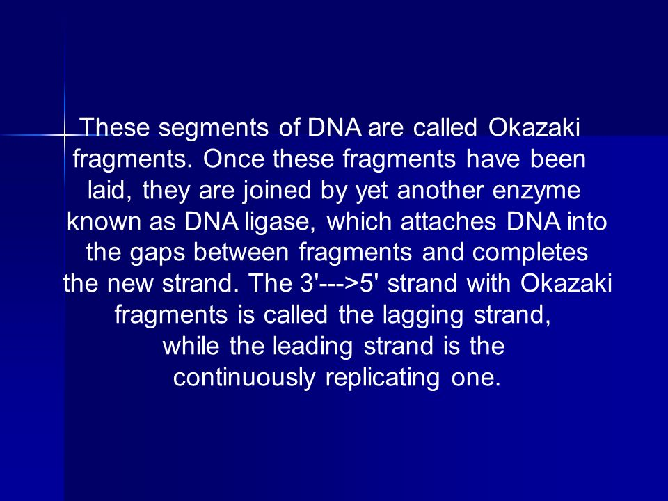 These segments of DNA are called Okazaki