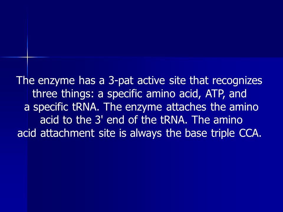 The enzyme has a 3-pat active site that recognizes