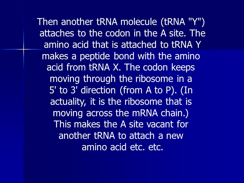 Then another tRNA molecule (tRNA Y )