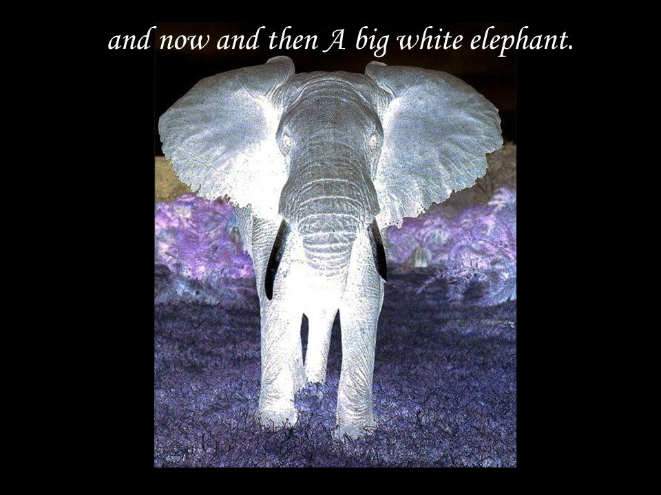 and now and then A big white elephant.