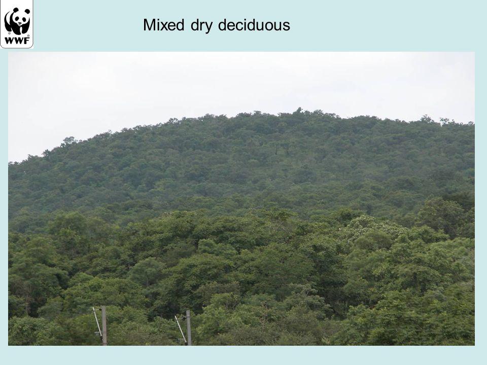 Mixed dry deciduous