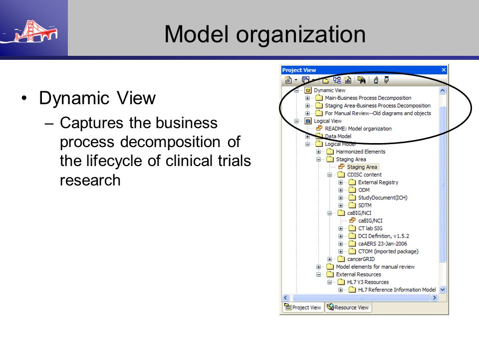 Model organization Dynamic View