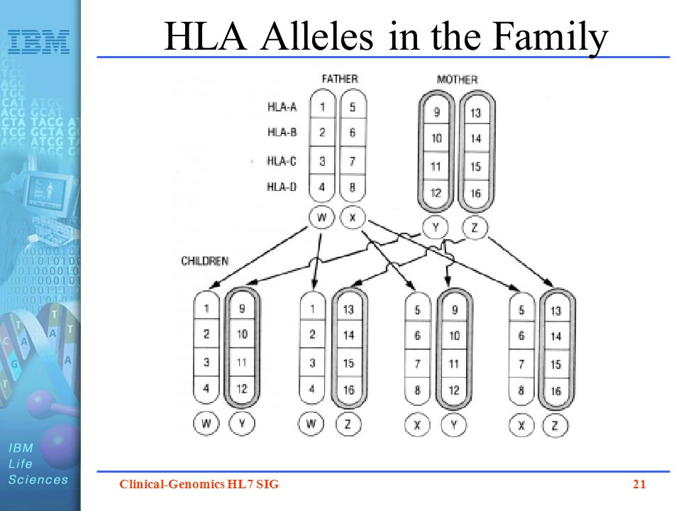 HLA Alleles in the Family
