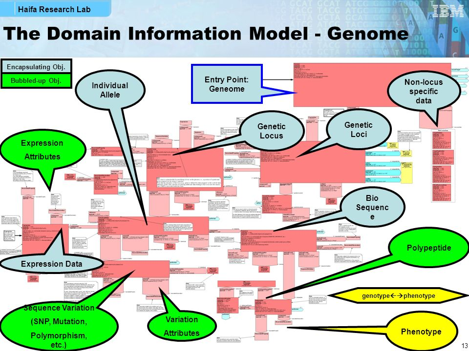 The Domain Information Model - Genome